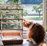 Red cat and bird cage. Pretty adult red cat and bird cage Stock Images