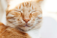 Red cat, close-up portrait of the head, squinted in the sun and Stock Photography