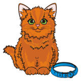 Red cat and collar Royalty Free Stock Image