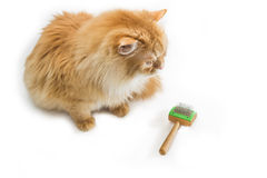 Red cat and comb for animals Stock Photos