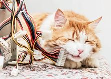 Red cat and computer wires. Adult charming red cat in dreams and computer wires on table Stock Photo