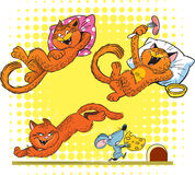 Red cat in different poses Royalty Free Stock Photos
