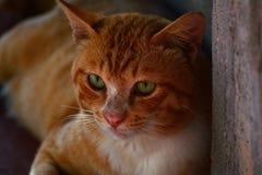 Red cat discreetly look close up. Beautiful cute red cat discreetly look close up Stock Photos