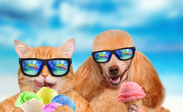 Red cat and dog eats ice cream. Royalty Free Stock Photo