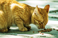 Red cat. The domestic cat is the most common pet. Cats are notable for their beautiful coat, expressive eyes, when the eyes of the cat has a large number of Stock Images