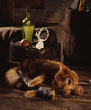 Red cat, dried fish and sour cream Stock Photography