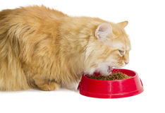 Red cat, eat dry cat food from a red bowl Royalty Free Stock Images