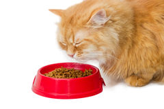 Red cat, eat dry cat food from a red bowl Stock Images