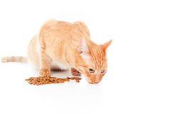 Red cat eats feed Royalty Free Stock Photo