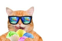 Red cat eats ice cream. Stock Photo