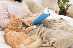 Red cat and female owner reading book at home. Hygge, literature and people concept - red tabby cat and female owner reading book in bed at home stock images