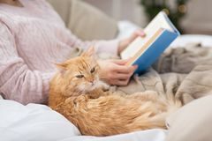 Red cat and female owner reading book at home. Pets, hygge and people concept - close up of red tabby cat and female owner reading book in bed at home royalty free stock photo