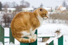 Red cat on the fence Royalty Free Stock Photography