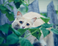 The red cat on the fence. Royalty Free Stock Image