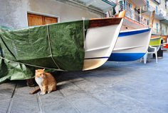 Red cat and fishing boats in an Italian village Manarola Stock Photos