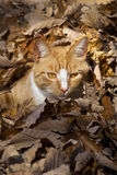 Red Cat in the foliage Stock Image