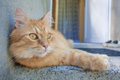Red Cat. In front of the house Royalty Free Stock Image