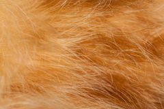 Red cat fur. Stock Photos