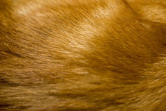 Red Cat Fur Texture Royalty Free Stock Photos
