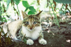 Red cat in the garden. Royalty Free Stock Images