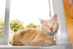 Red cat. Ginger cat on the windowsill Royalty Free Stock Images