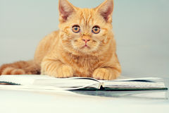 Red cat with glasses Royalty Free Stock Photo