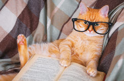 Red cat in glasses lying on sofa with book Royalty Free Stock Photos