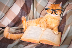 Red cat in glasses lying on sofa with book Royalty Free Stock Images