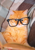 Red cat in glasses lying on sofa with book Stock Photography