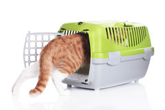 Red cat going in cat transport box Royalty Free Stock Photo