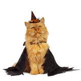 Red cat on Halloween. Cat on Halloween on a white background royalty free stock images