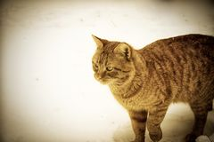 Red-Cat. Red-headed Cat. The best cat.nCat, Retro, Snow Royalty Free Stock Photography