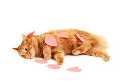 Red cat in heart valentines Royalty Free Stock Image