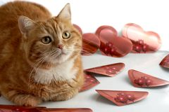 Red cat and hearts Stock Photography