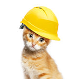 Red cat with helmet Royalty Free Stock Images