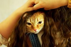 Red cat hid in the girl`s hair.  stock photos