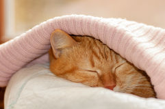 Red cat hiding under blanket. Pink Stock Images