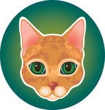 Red cat icon Royalty Free Stock Image