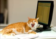 Red Cat Laughs on the computer Stock Photography