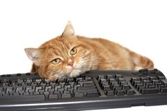 Red cat lays on the keyboard Stock Image