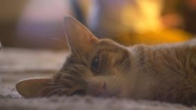 Red cat lies on the couch. Head and eye in the center stock footage