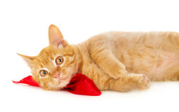 Red cat lies on the floor in the red ribbon Royalty Free Stock Image