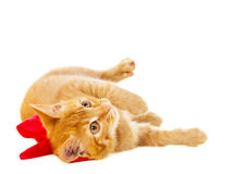 Red cat lies on the floor with ribbon Stock Photos