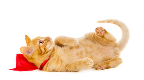 Red cat lies on the floor with ribbon Royalty Free Stock Photos