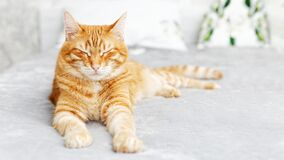 Free Red Cat Lies On The Bed With His Eyes Closed And Dozing. Shallow Focus. Stock Photos - 178883493