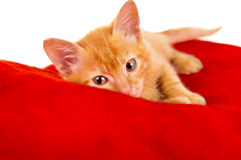 Red cat lies on a pillow Royalty Free Stock Photo