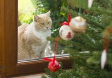 Red cat looking at a Christmas tree with toys Royalty Free Stock Images