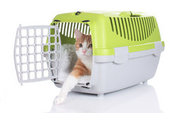 Red cat looking out of pet carrier. Isolated Stock Photos