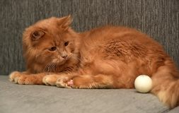 Red cat lying. On the couch Royalty Free Stock Photography