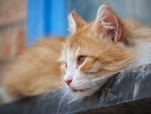 Red cat lying looks ahead close up. Outdoor Stock Photos